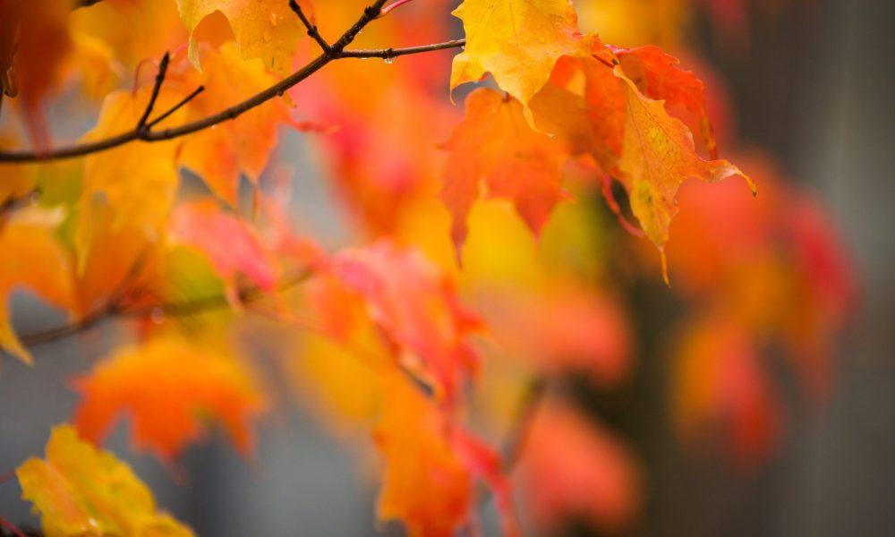 El otoño contigo