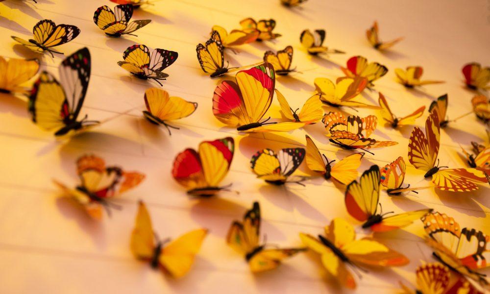 Mariposas en la panza