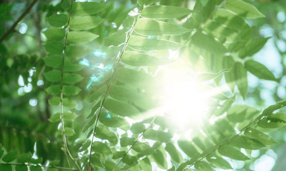 Eres luz